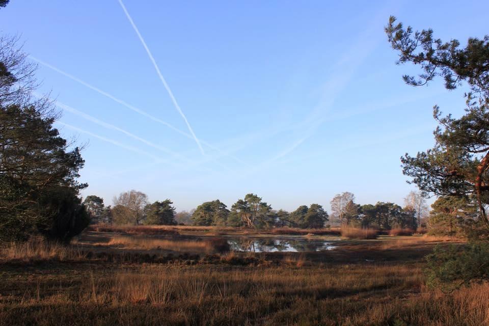 fgb-twentse-natuur-wandeling